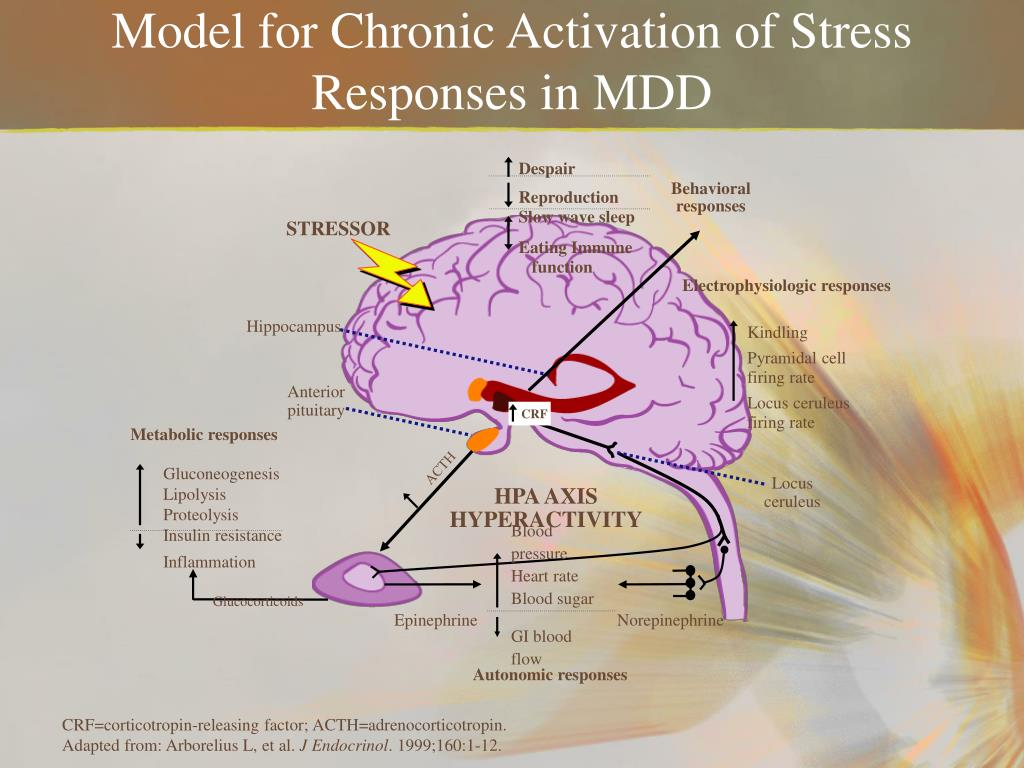 Model for Chronic Activation of Stress Responses in MDD