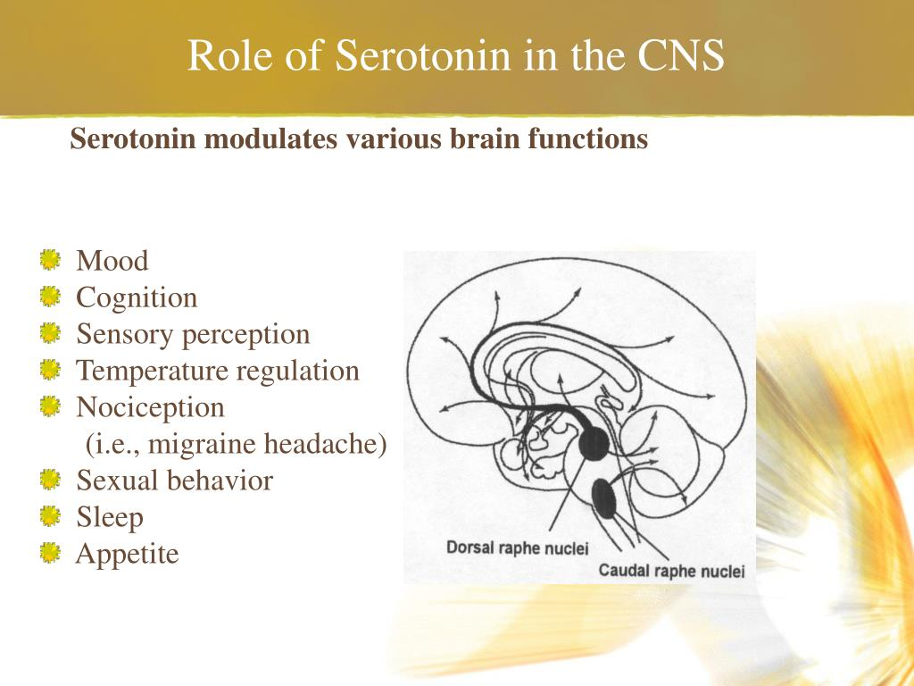Role of Serotonin in the CNS