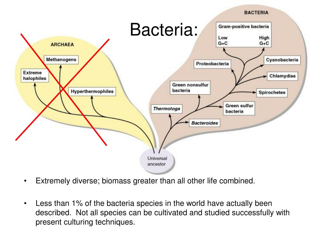Bacteria: