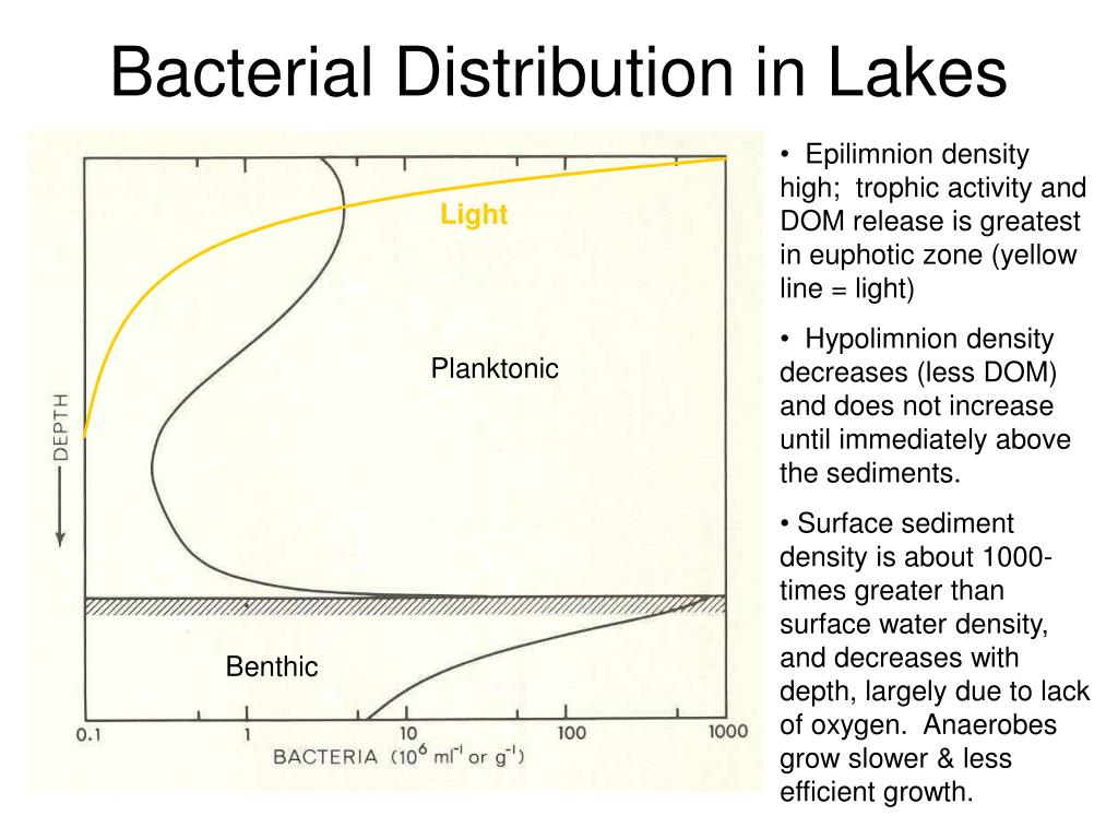 Bacterial Distribution in Lakes