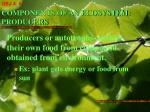 components of an ecosystem producers