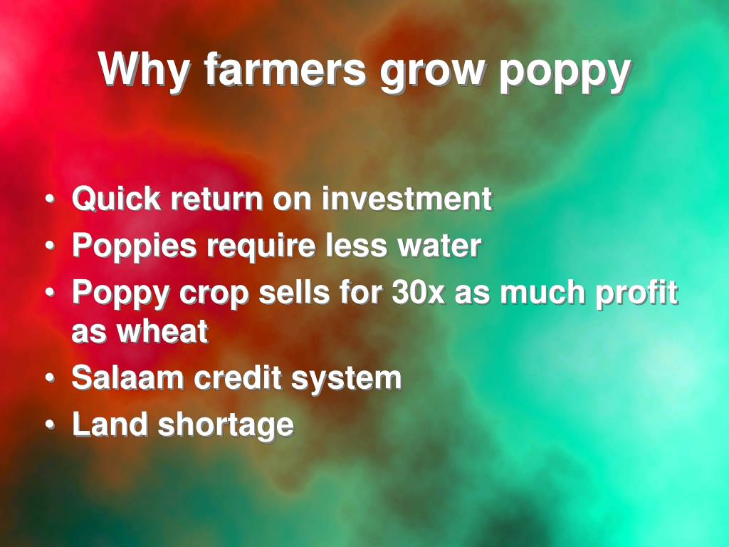 Why farmers grow poppy
