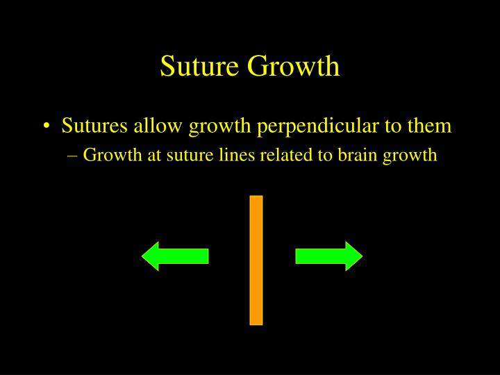 Suture Growth