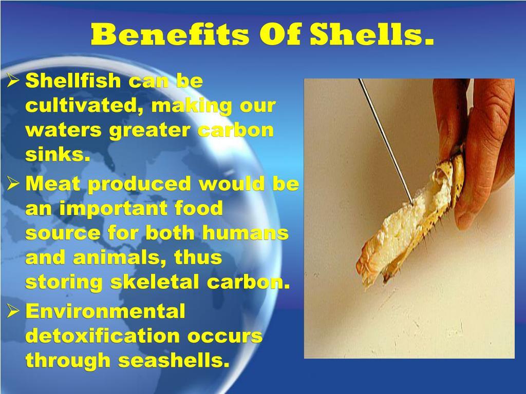 Benefits Of Shells.