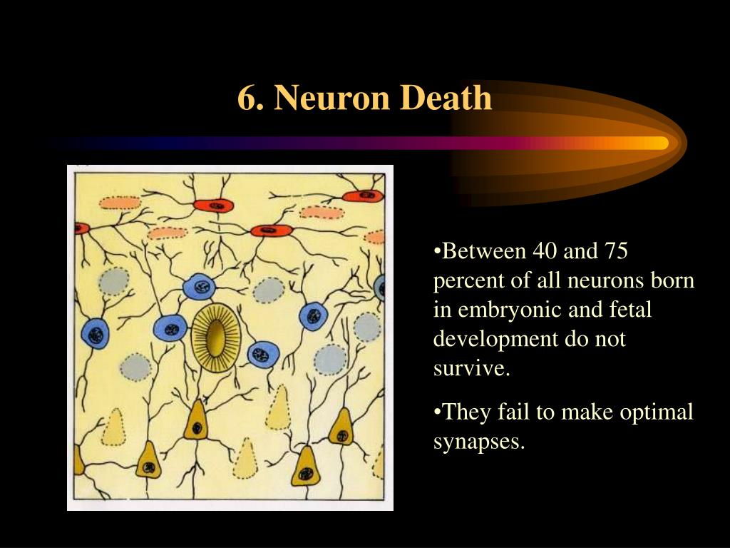 6. Neuron Death