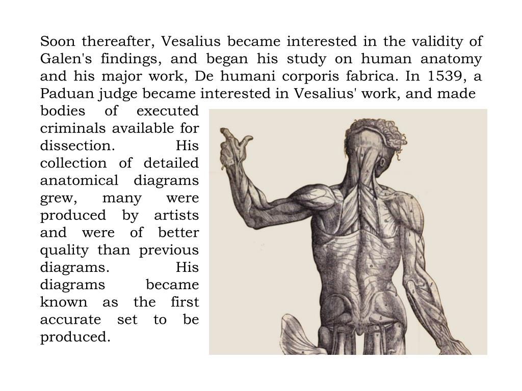Soon thereafter, Vesalius became interested in the validity of Galen's findings, and began his study on human anatomy and his major work, De humani corporis fabrica. In 1539, a Paduan judge became interested in Vesalius' work, and made