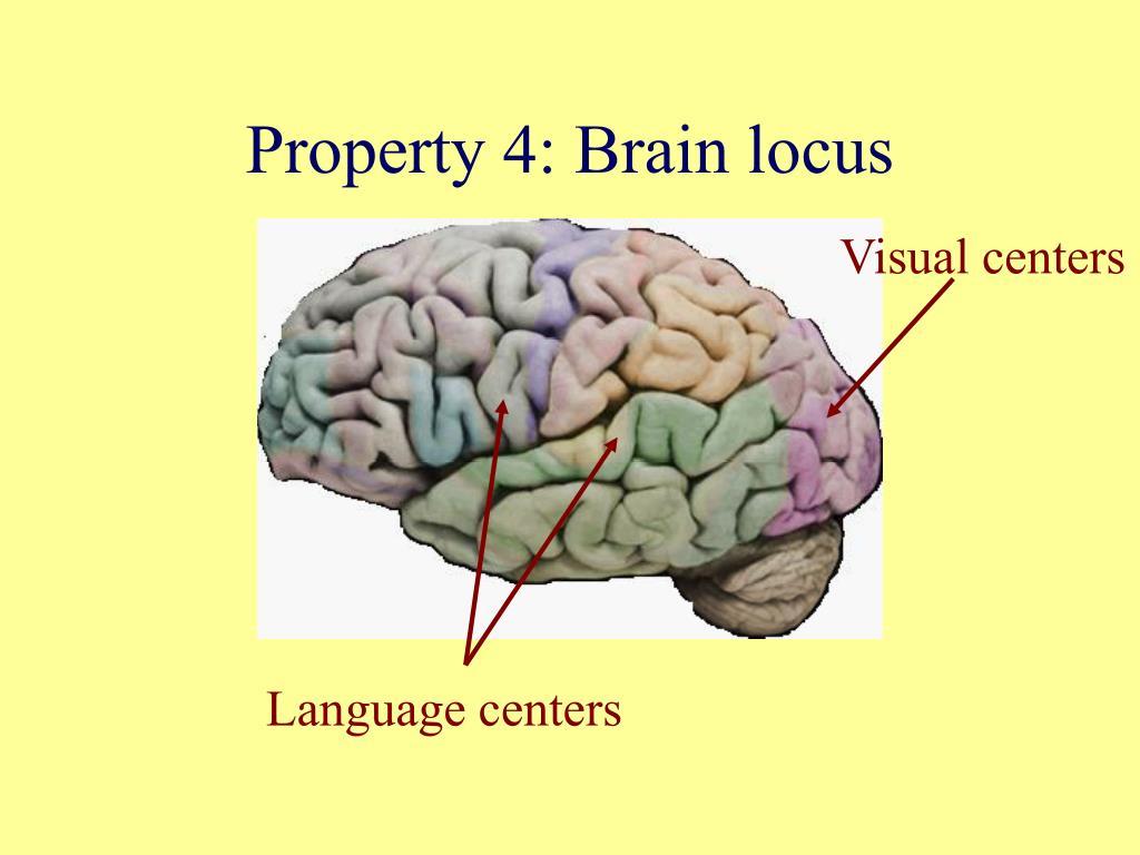 Property 4: Brain locus