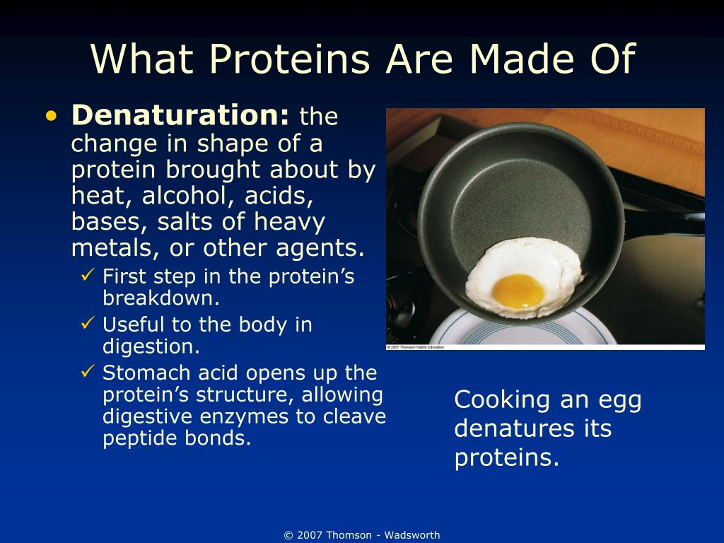 What Proteins Are Made Of
