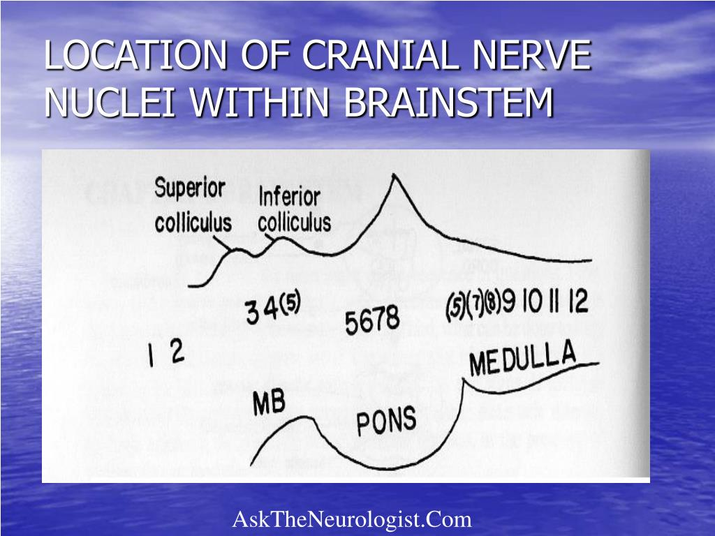 LOCATION OF CRANIAL NERVE NUCLEI WITHIN BRAINSTEM