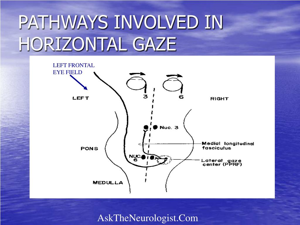 PATHWAYS INVOLVED IN HORIZONTAL GAZE