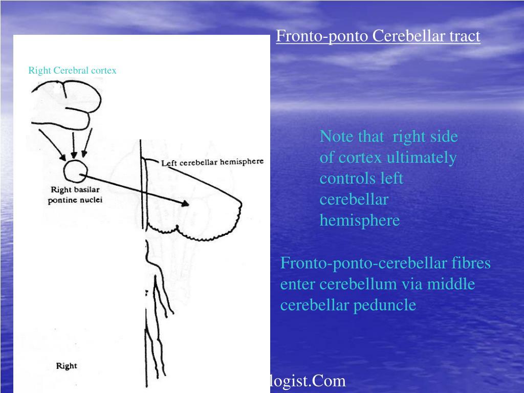 Fronto-ponto Cerebellar tract