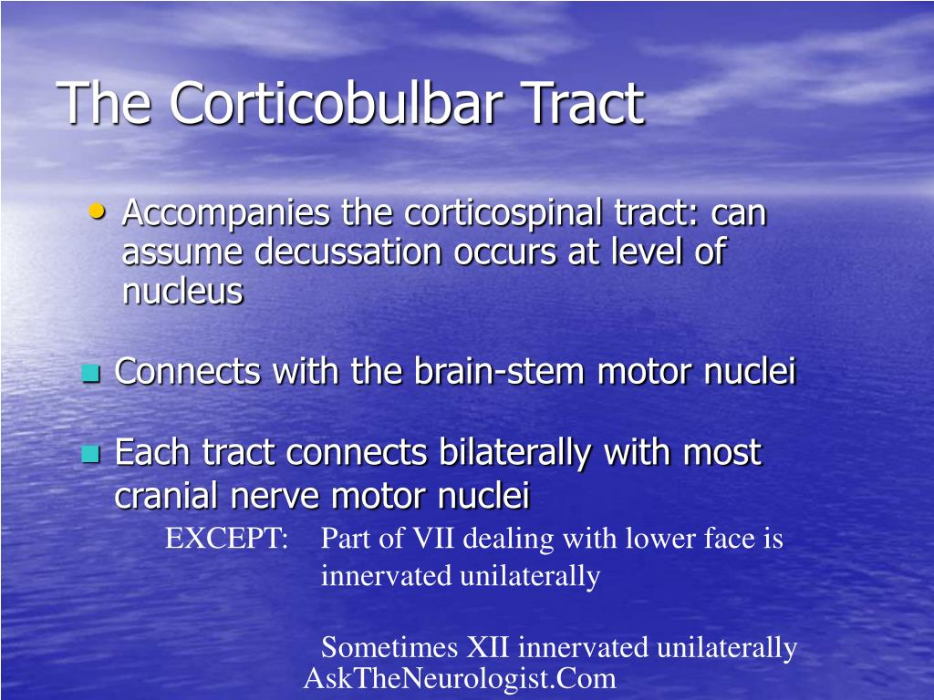 The Corticobulbar Tract