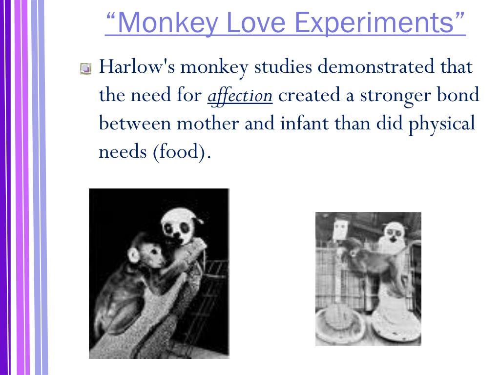 """""""Monkey Love Experiments"""""""
