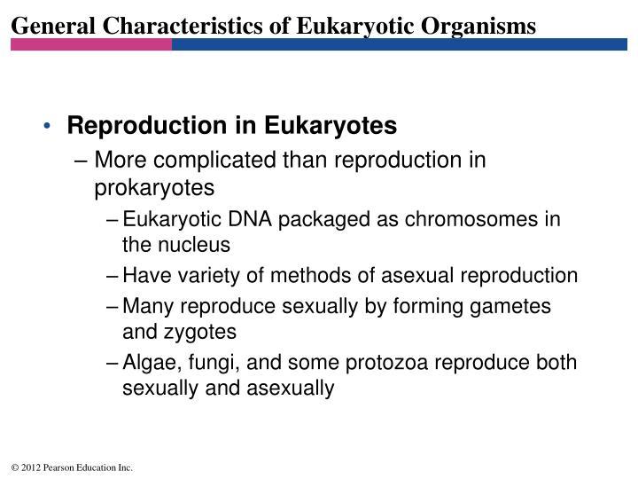 General characteristics of eukaryotic organisms3