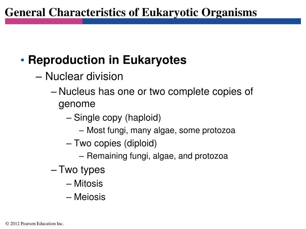 General Characteristics of Eukaryotic Organisms