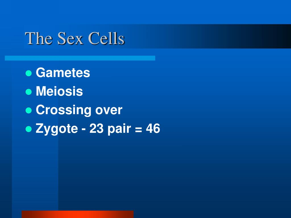 The Sex Cells