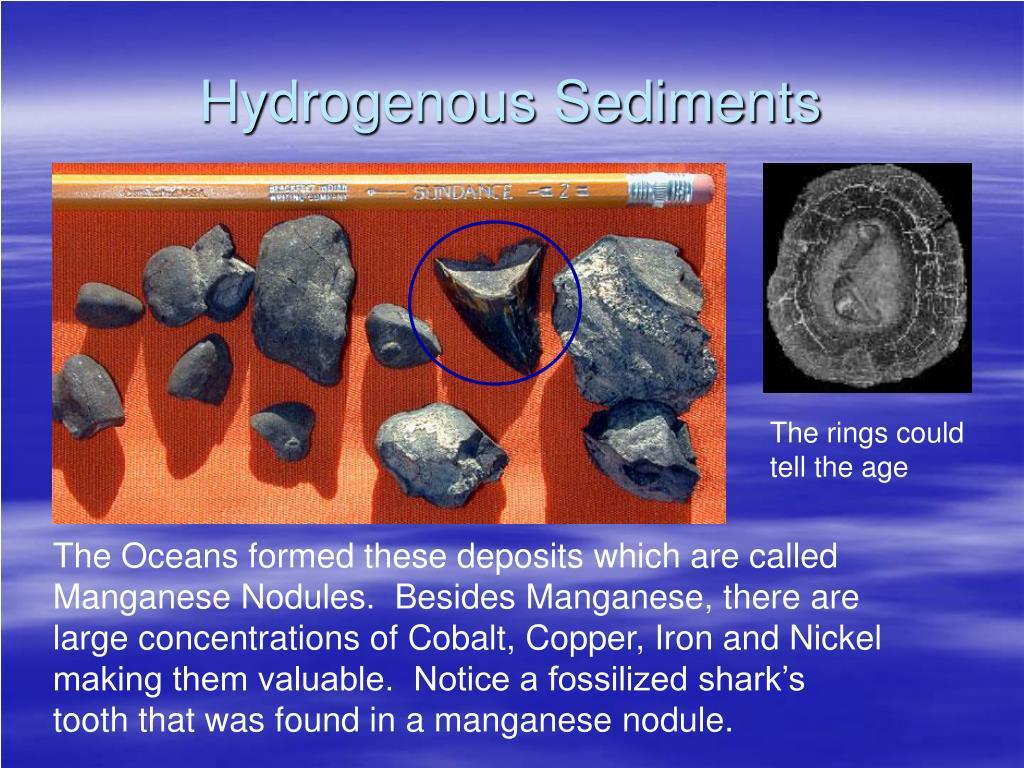 Hydrogenous Sediments