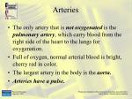 arteries28