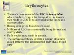 erythrocytes7