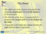 the heart22
