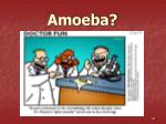 amoeba35