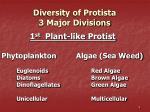 diversity of protista 3 major divisions