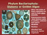 phylum bacilariophyta diatoms or golden algae
