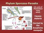 phylum sporozoa parasite