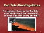 red tide dinoflagellates