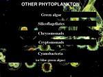 other phytoplankton