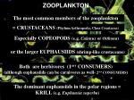 zooplankton20
