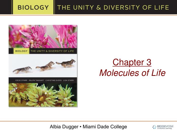 chapter 3 molecules of life n.