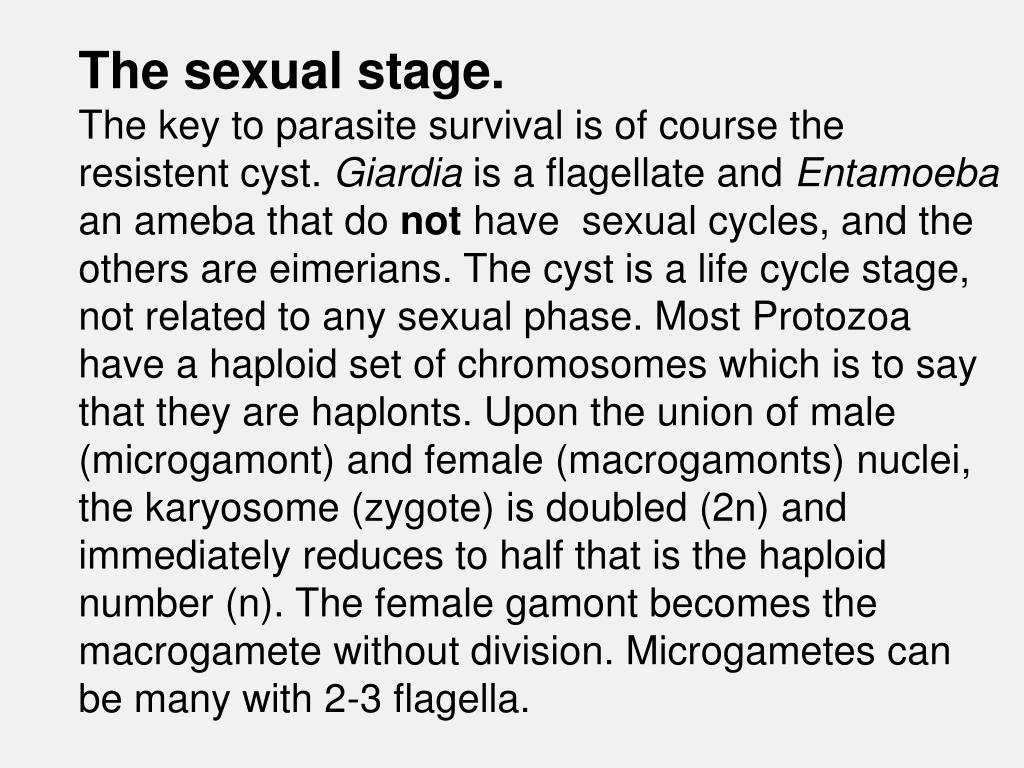 The sexual stage.