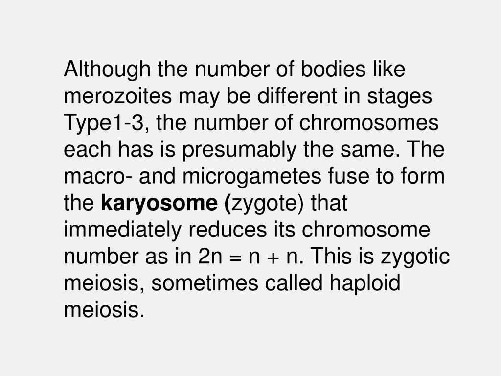 Although the number of bodies like merozoites may be different in stages Type1-3, the number of chromosomes each has is presumably the same. The macro- and microgametes fuse to form the