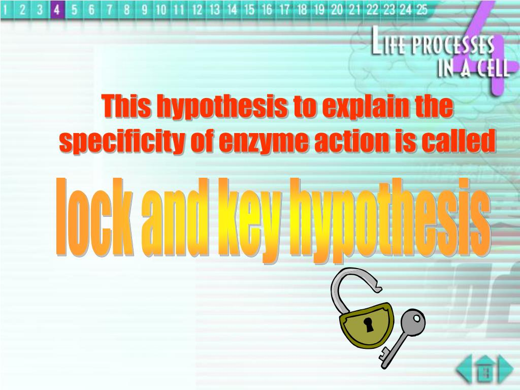 This hypothesis to explain the specificity of enzyme action is called
