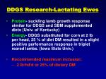 ddgs research lactating ewes