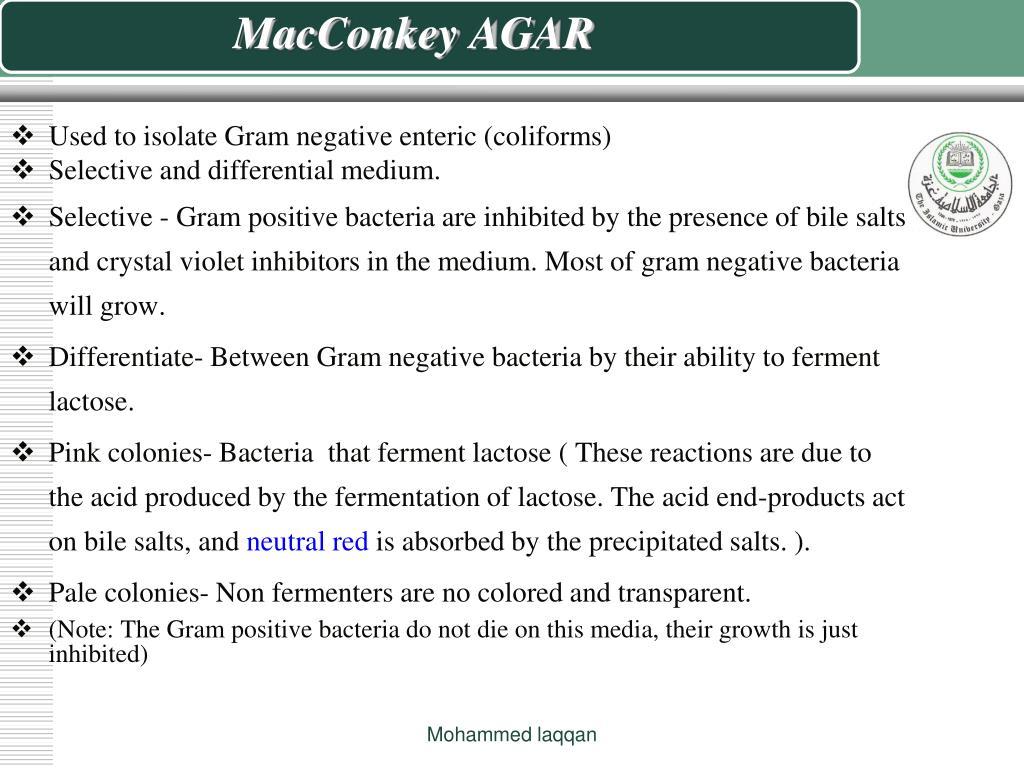 MacConkey AGAR