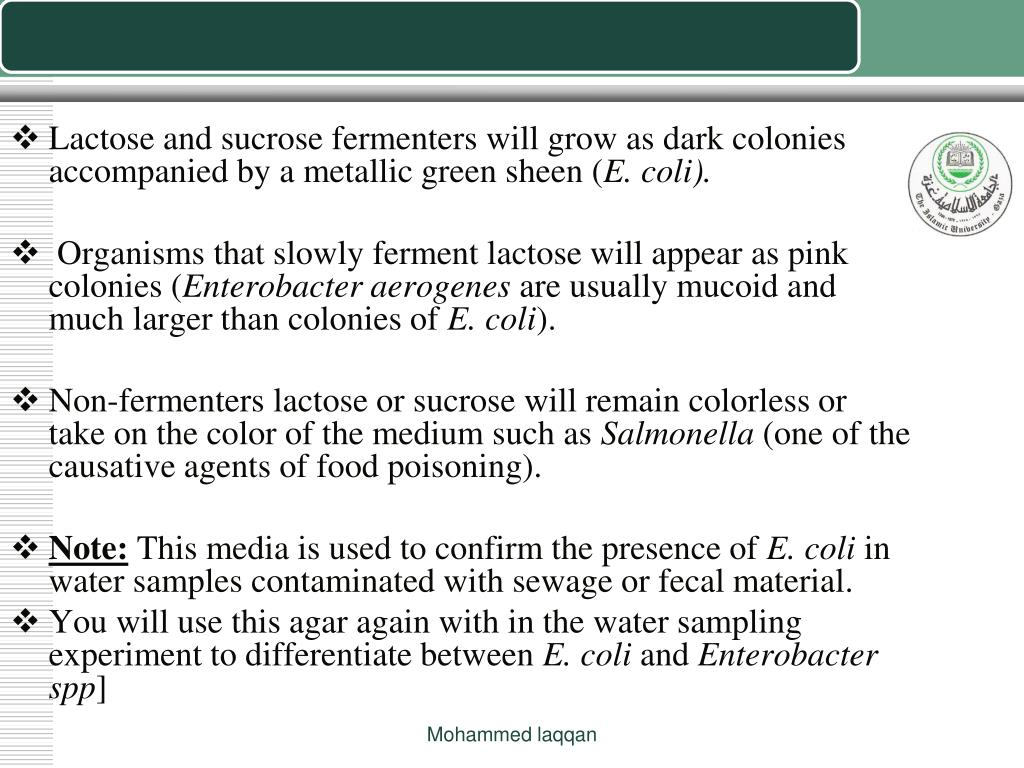 Lactose and sucrose fermenters will grow as dark colonies accompanied by a metallic green sheen (