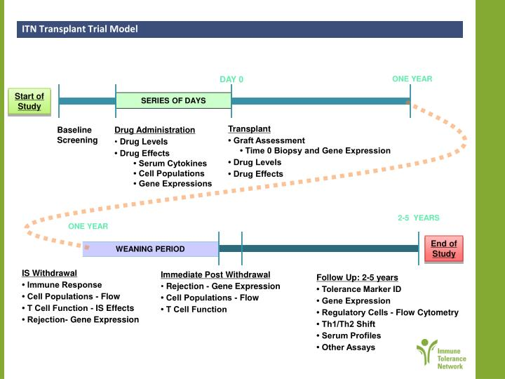 ITN Transplant Trial Model
