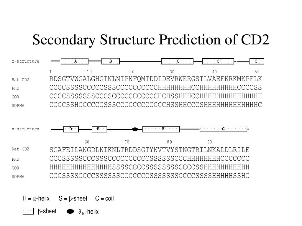 Secondary Structure Prediction of CD2