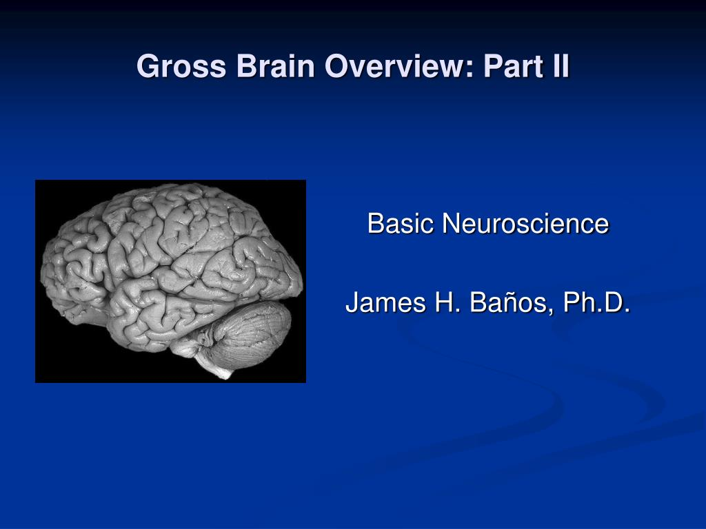 gross brain overview part ii