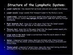 structure of the lymphatic system