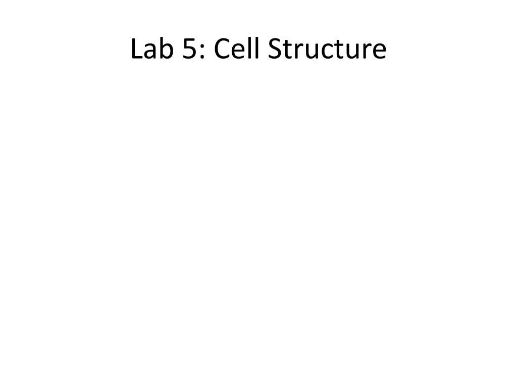 Lab 5: Cell Structure