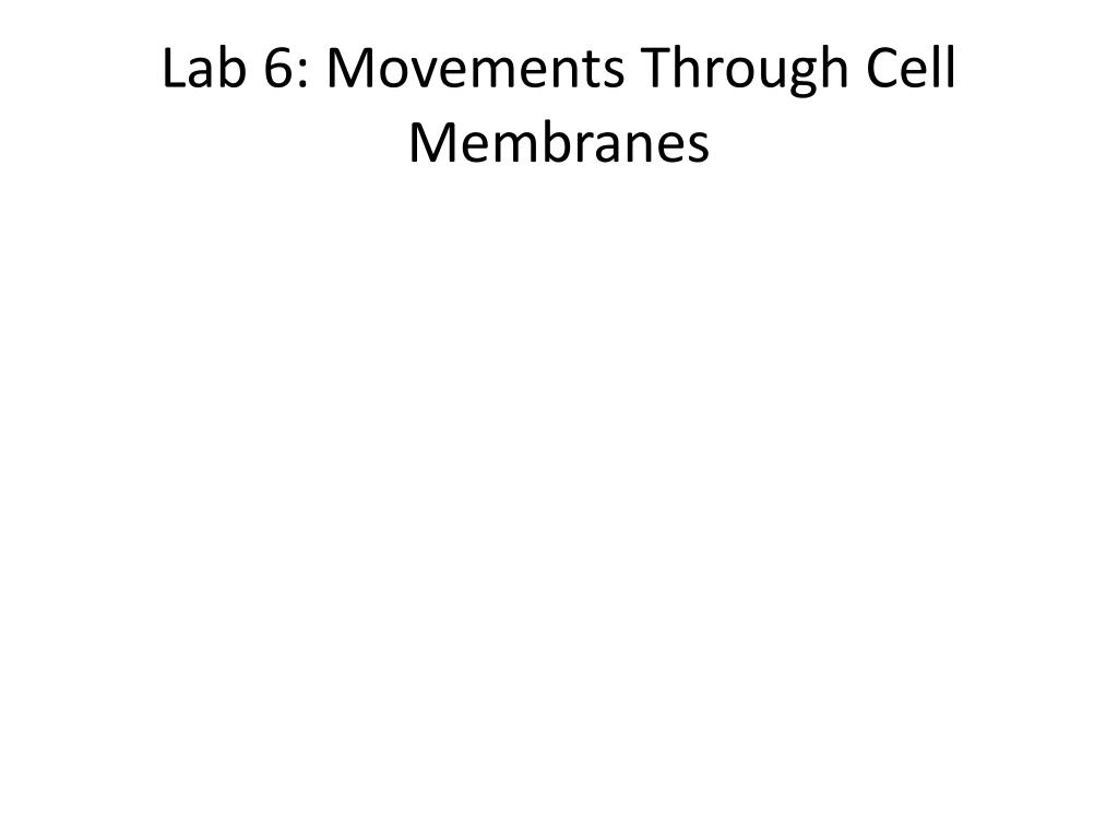 Lab 6: Movements Through Cell Membranes