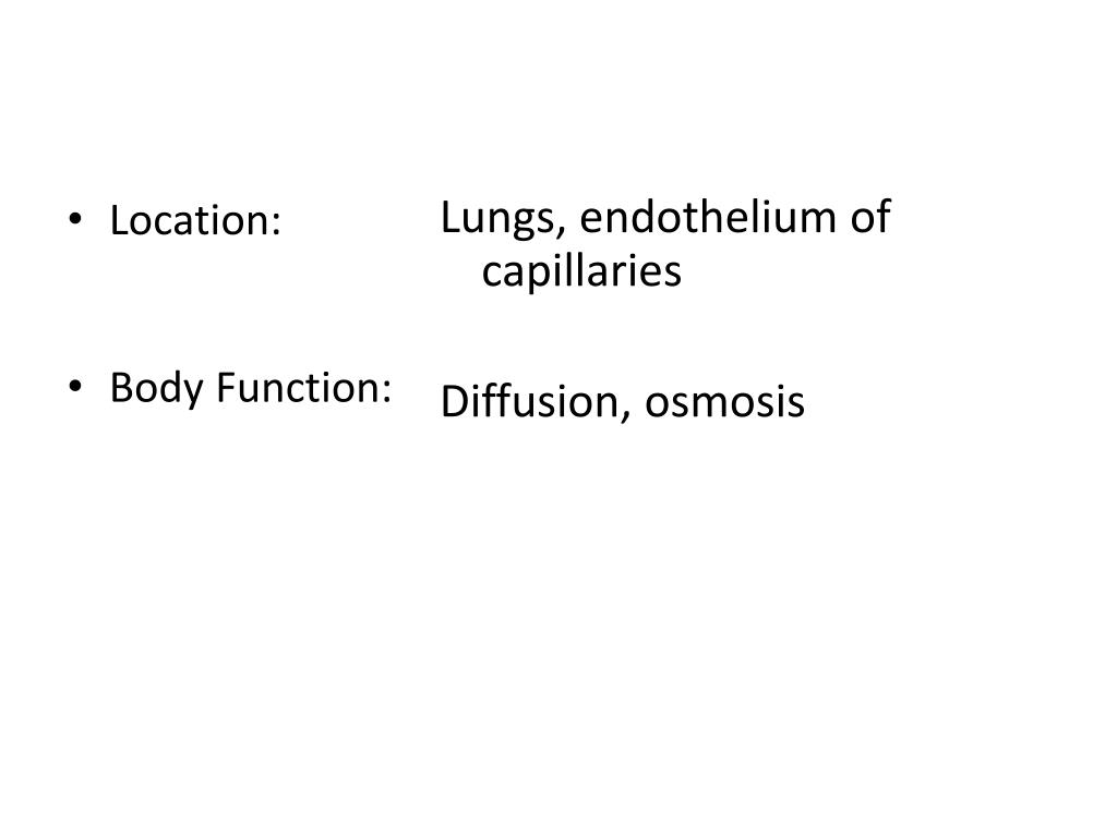 Lungs, endothelium of capillaries