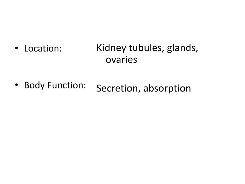 Kidney tubules, glands, ovaries