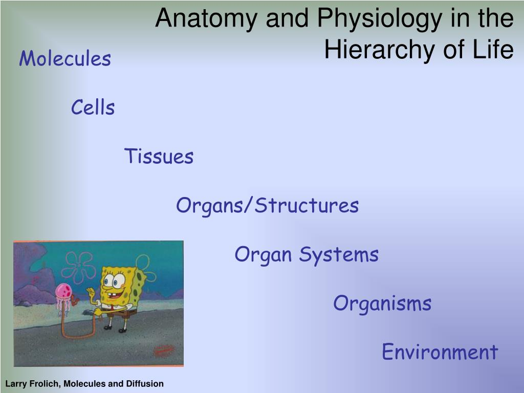 Anatomy and Physiology in the Hierarchy of Life