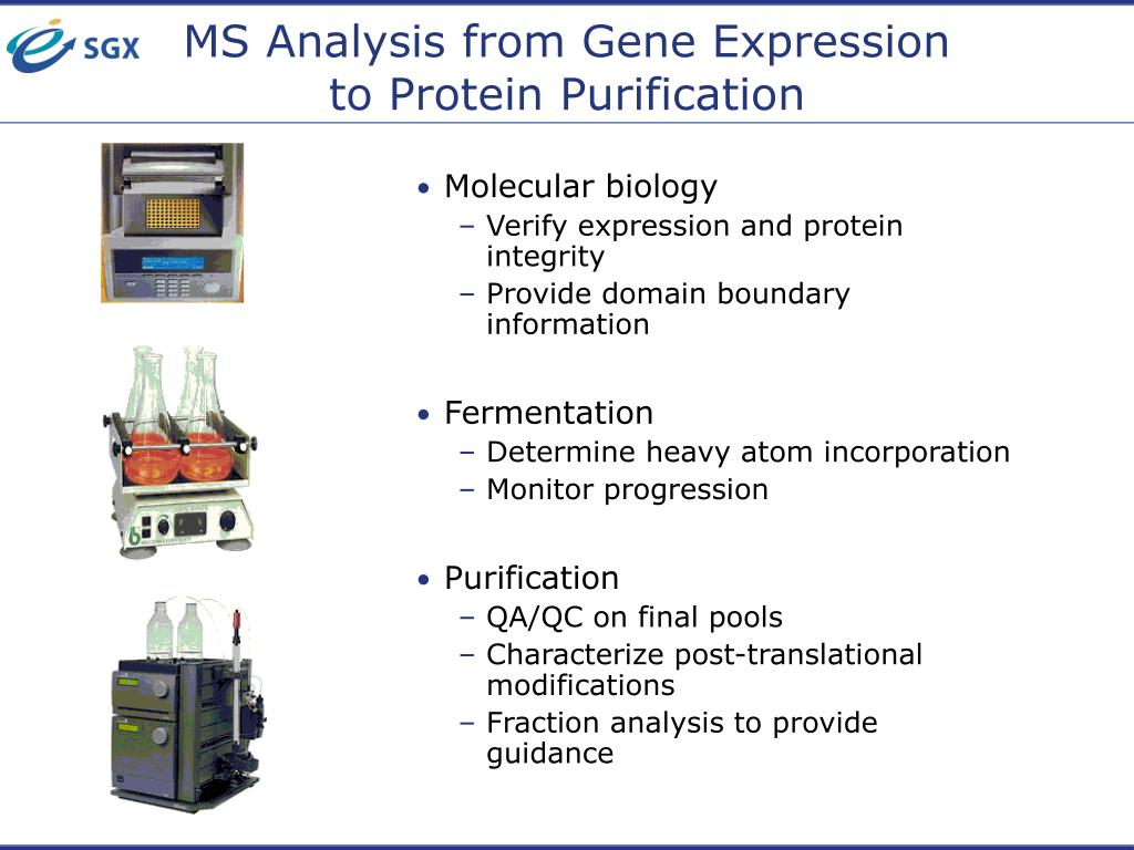 MS Analysis from Gene Expression to Protein Purification