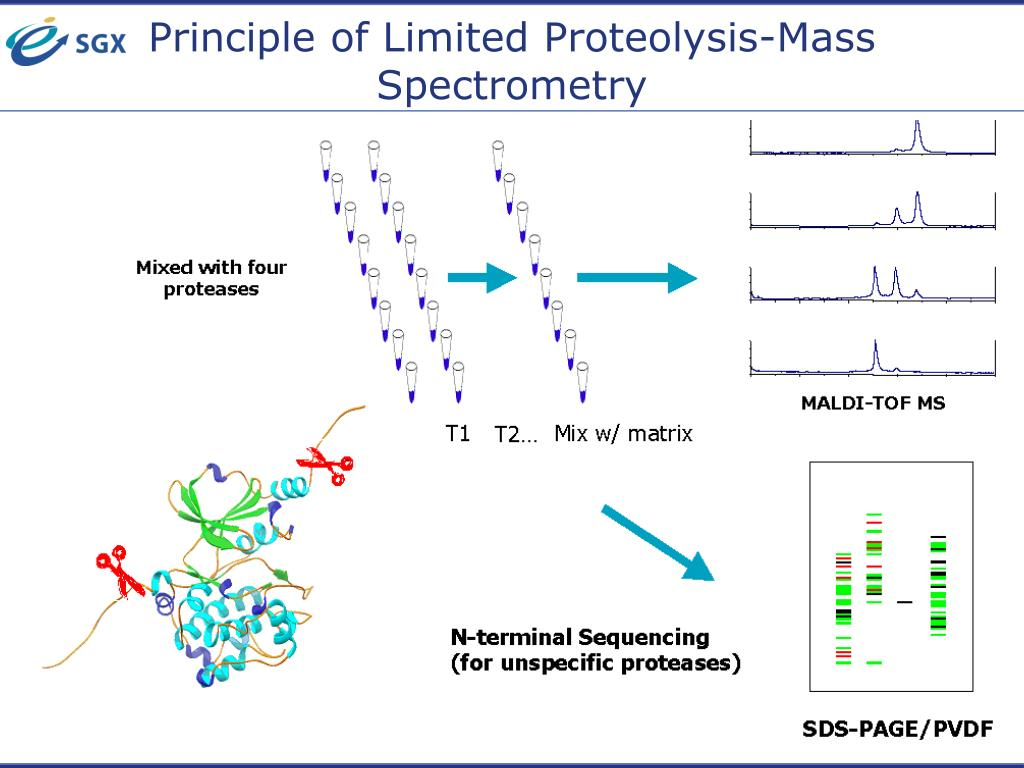 Principle of Limited Proteolysis-Mass Spectrometry