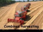 combines harvesting